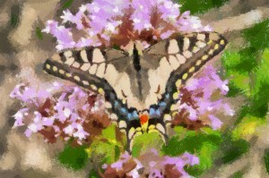 butterfly2_Crayon